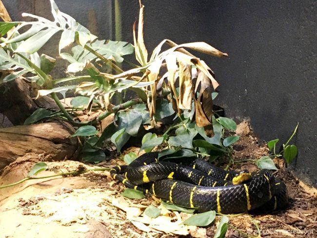 London Zoo - Reptile House