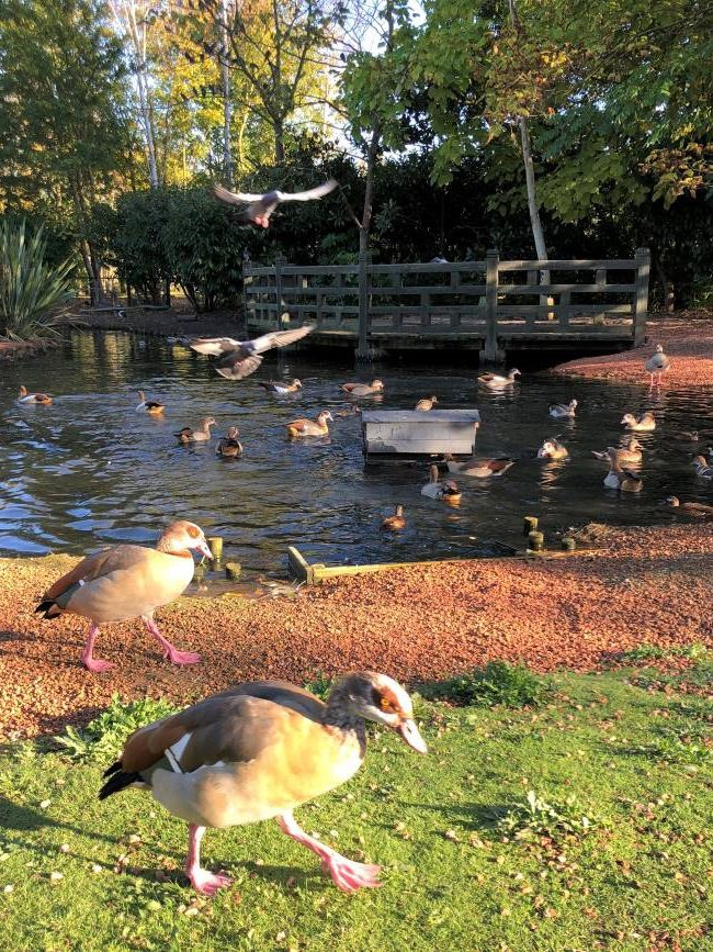 Wildfowl at London Wetlands Centre