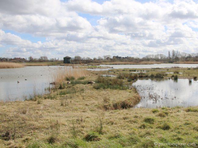 WWT London Wetland Centre Barnes
