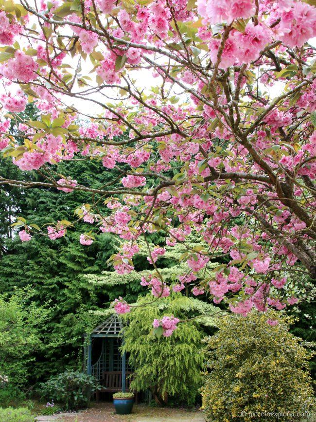 Blossoms at Birdworld