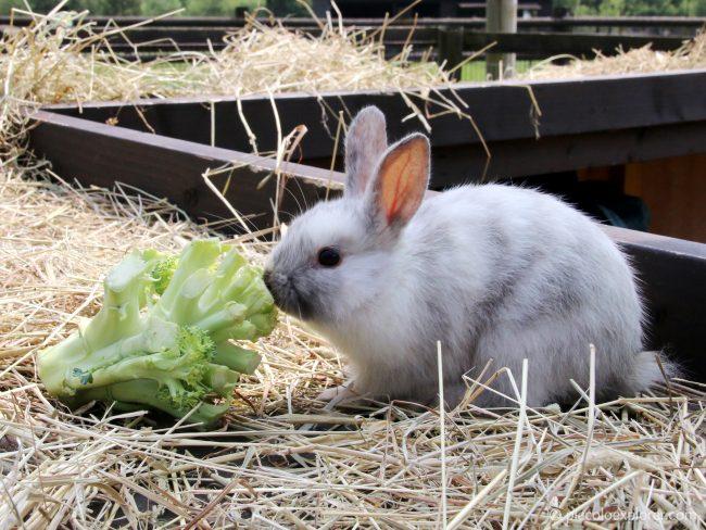 Rabbit at Birdworld