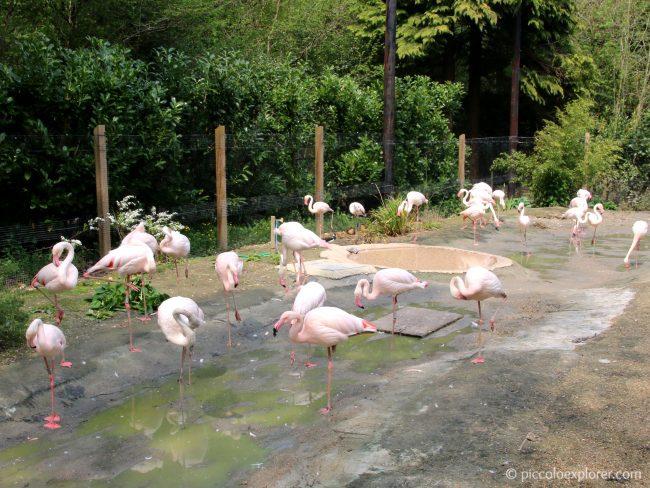 Flamingoes at Birdworld