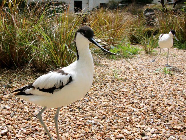 Birdworld, Farnham, Surrey
