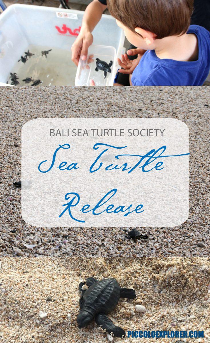 Turtle Release at Kuta Beach with the Bali Sea Turtle Society