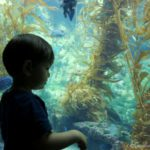 Our Visit to the Birch Aquarium, La Jolla