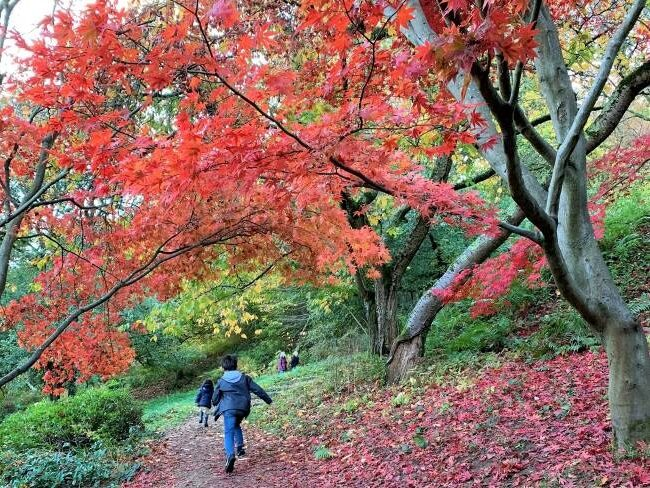 Winkworth Arboretum Autumn Colours