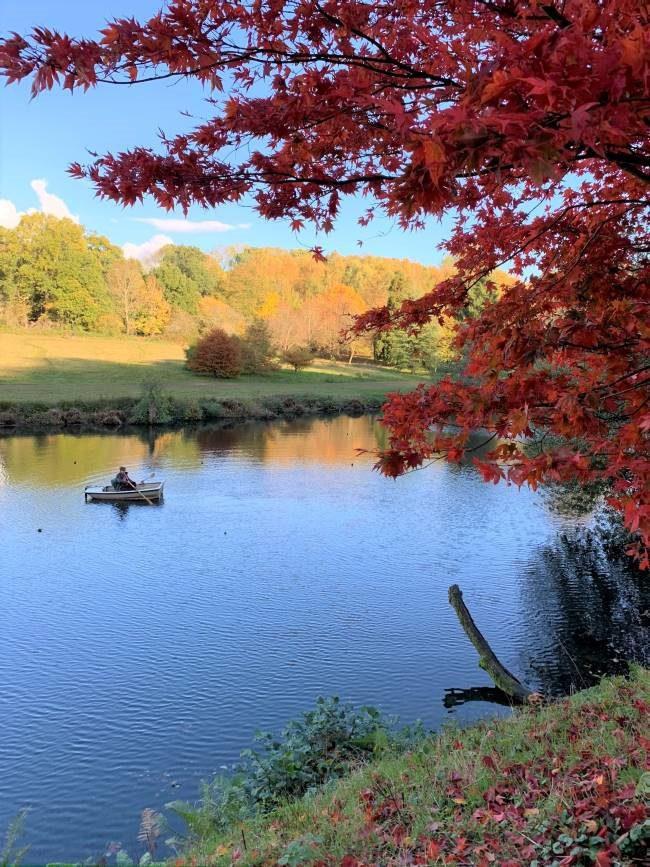 Autumn colour in Surrey