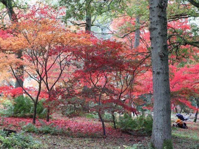 Autumn walks around Winkworth Arboretum