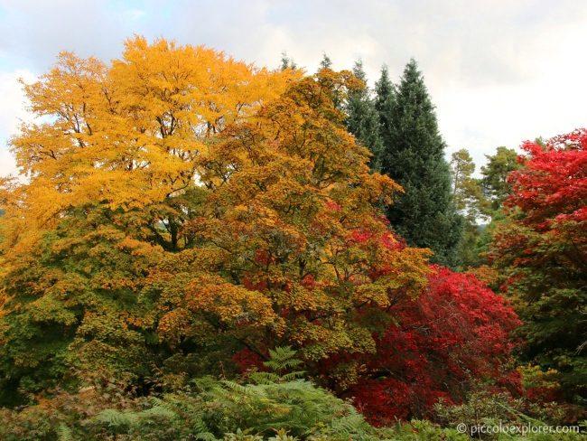 Best Autumn Walks Surrey