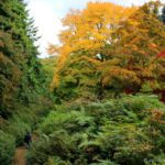 Day Out at Winkworth Arboretum