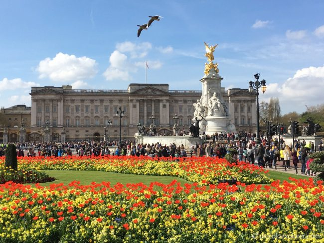 Tulips at Buckingham Palace, London