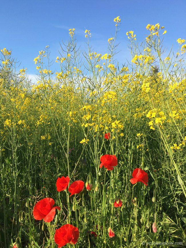 Fano Countryside, Marche Italy