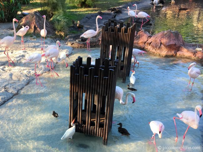 Flamingos at Animal Kingdom Lodge, Orlando