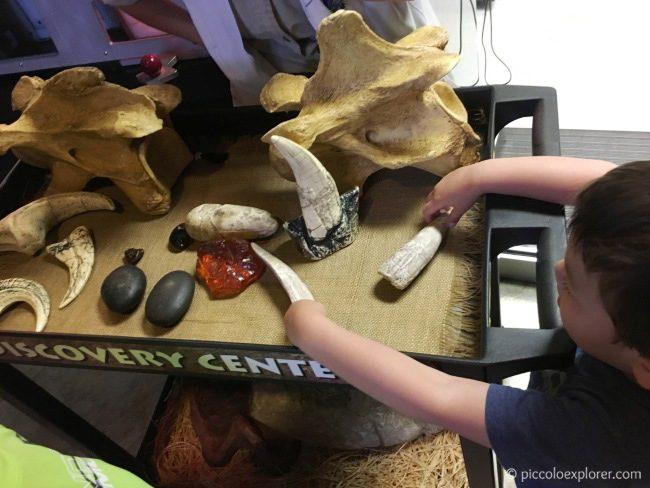 Dinosaur Discovery Center, Jurassic Park, Universal's Islands of Adventure, Orlando, FL