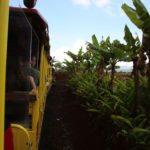 Dole Plantation Train Tour, Oahu