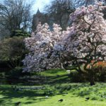 Best Places to Enjoy Spring in London