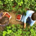 Garsons Farm Pick Your Own Surrey