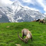 Visiting the Merlet Animal Park in Les Houches