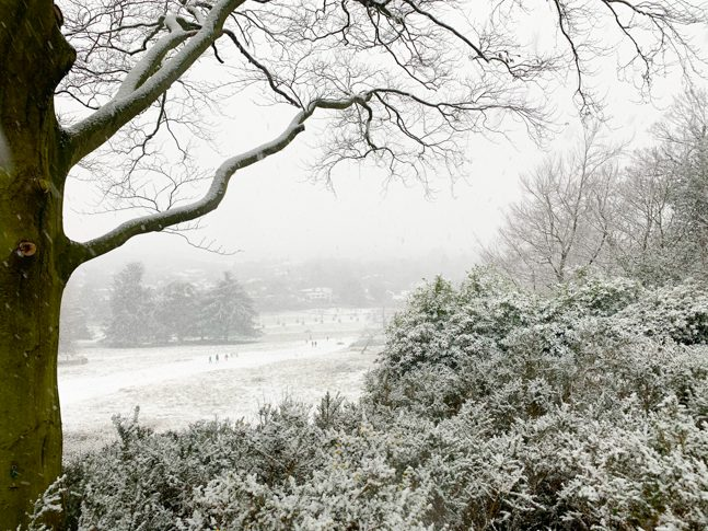 Snow Richmond Park