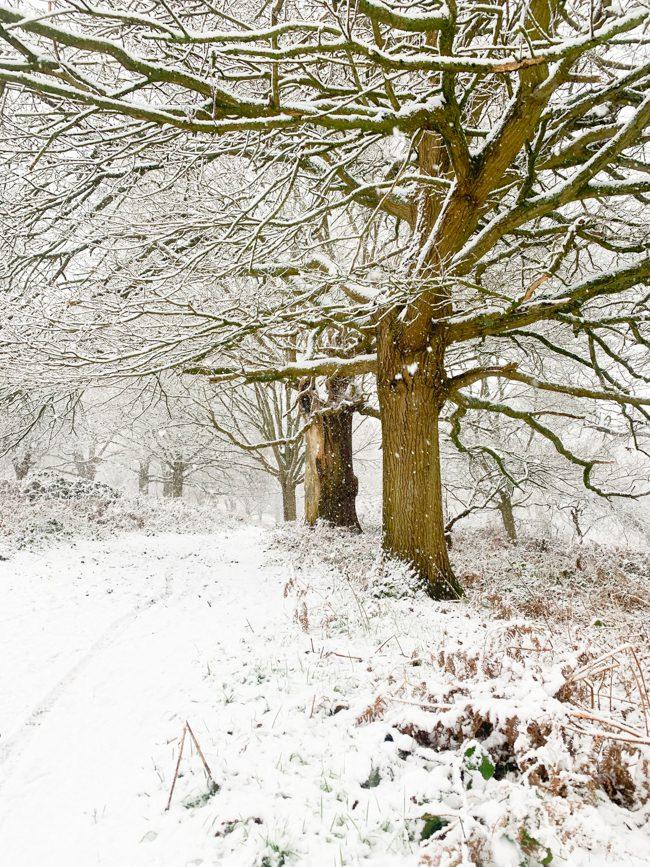 Snow in Richmond Park London