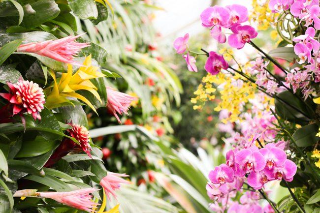 Kew Gardens Orchids Festival 2018