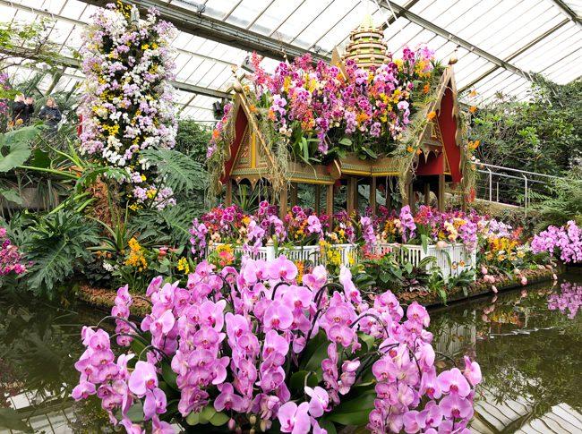 Kew Gardens Orchid Festival 2018