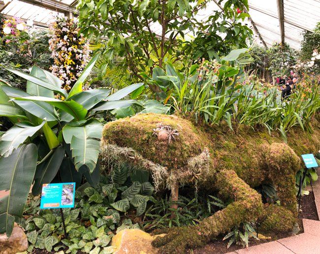 Kew Gardens Orchid Festival 2018 Water Dragon