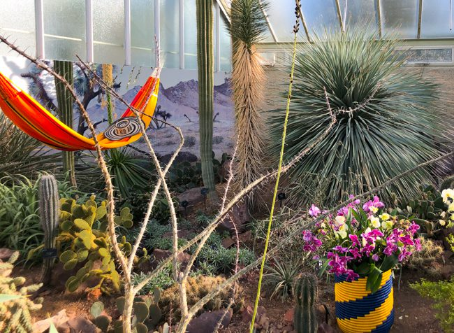 Kew Gardens Orchid Festival 2019 Colombia