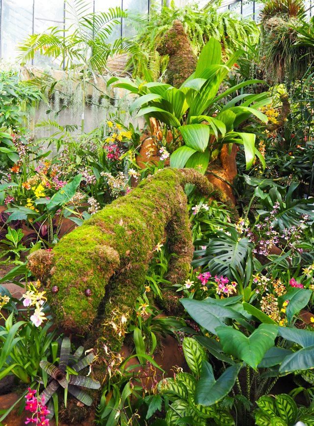 Kew Gardens Orchid Festival 2019
