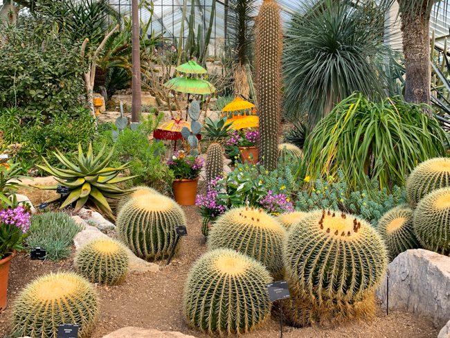 Kew Gardens Orchid Festival 2020
