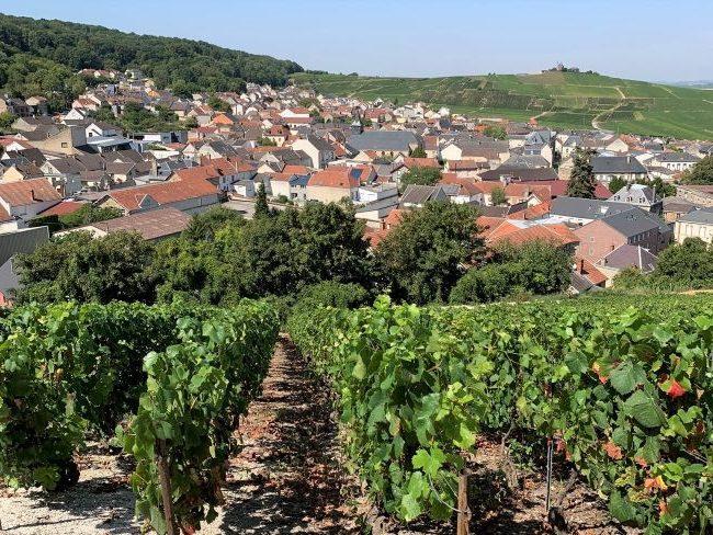 Champagne vineyards overlooking Verzenay