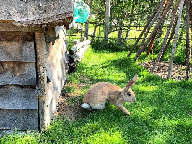Rabbit Walkthrough at Hobbledown