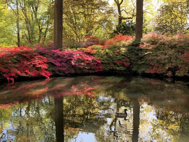 Still Pond Isabella Plantation