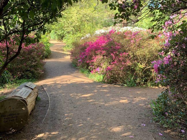 Isabella Plantation in bloom