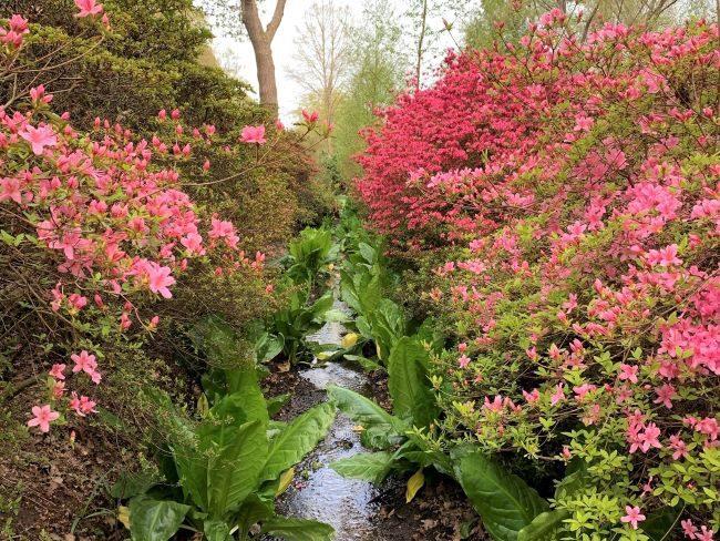 Isabella Plantation Richmond Park