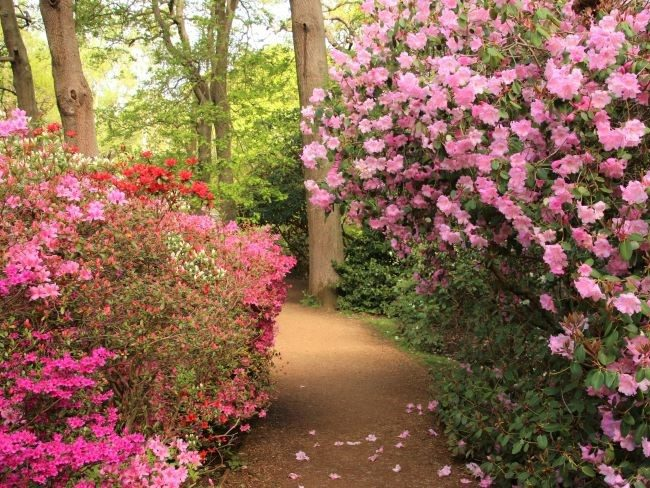 Richmond Park woodland garden