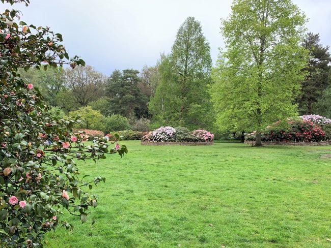 Thomson's Lawn