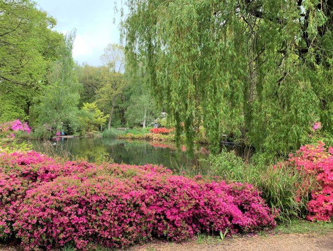 Thomson's Pond Isabella Plantation