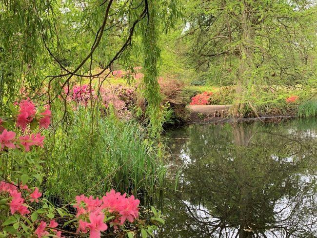 Thomson's Pond Richmond Park