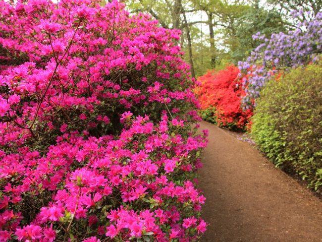 Spring in Isabella Plantation