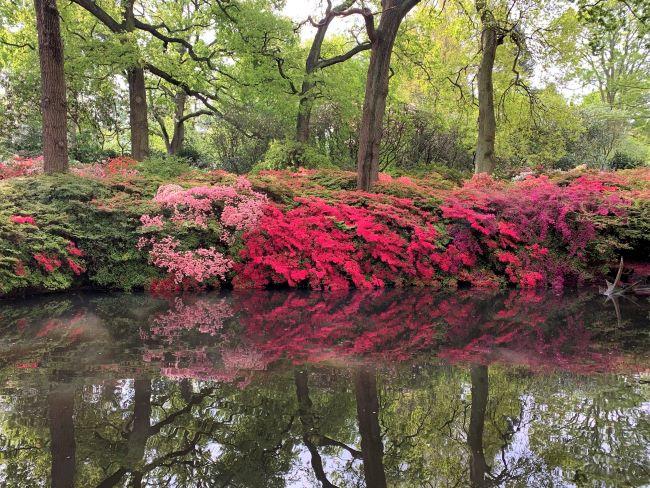 May 2021 Still Pond Richmond Park