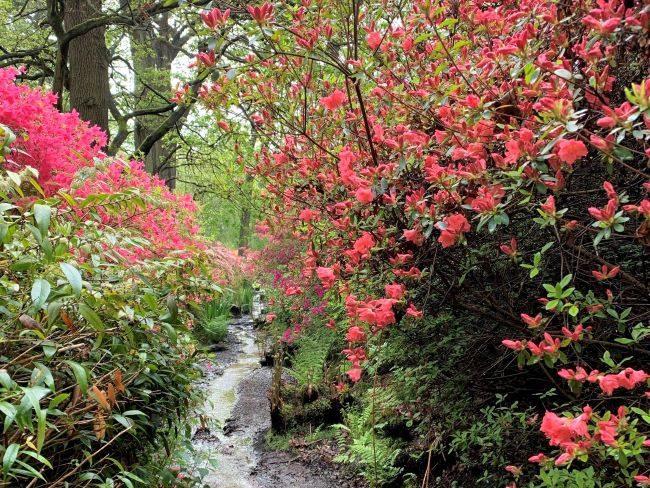 Streams Richmond Park