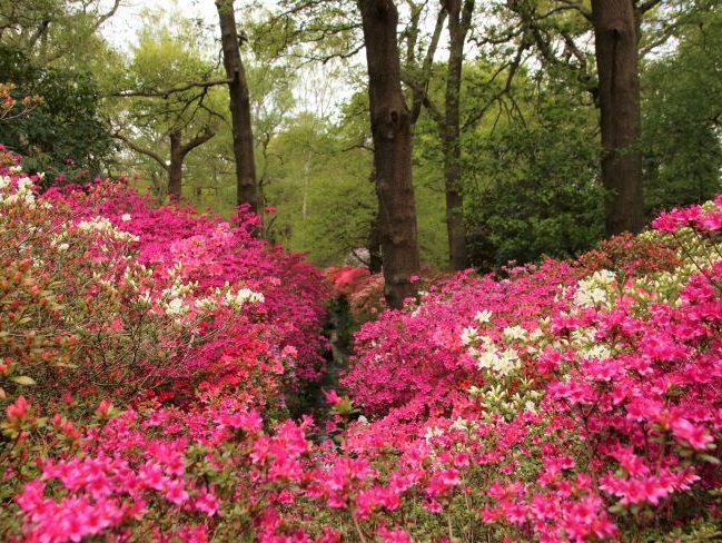 Woodland garden Richmond Park