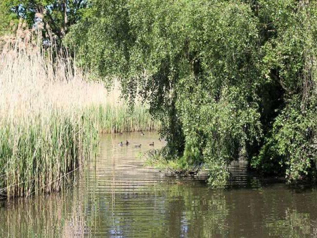 Peg's Pond in Isabella Plantation