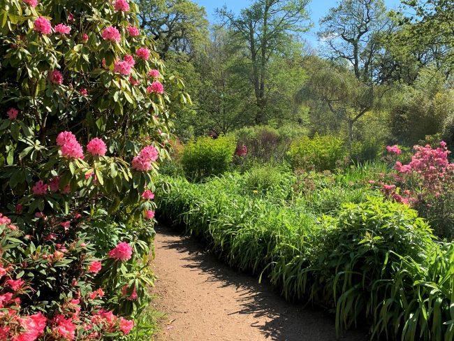 Spring flowers at Isabella Plantation