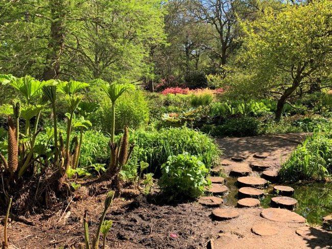 Bog Garden Richmond Park