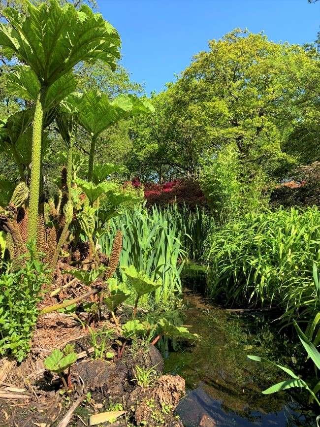 2021 Spring photos Isabella Plantation