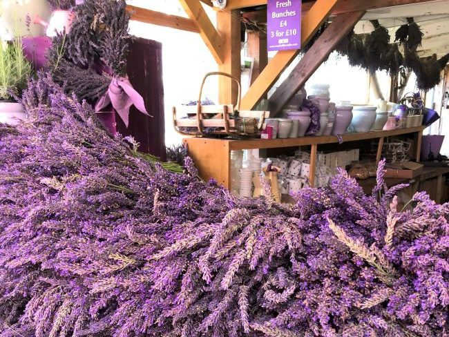 Lavender Bunches at Mayfield Surrey
