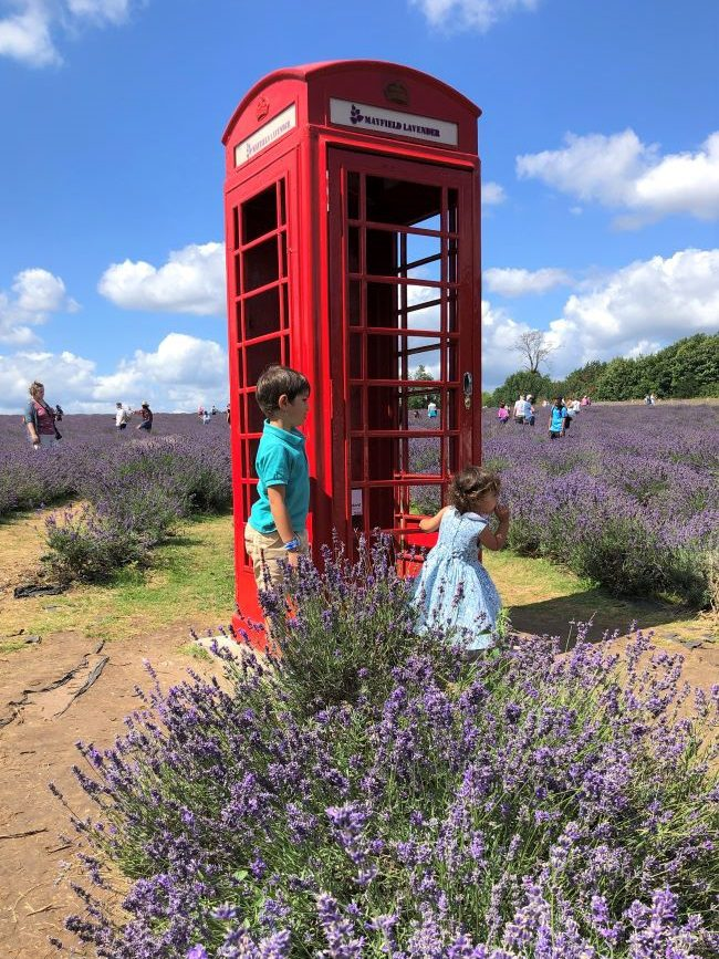 Lavender Fields near London