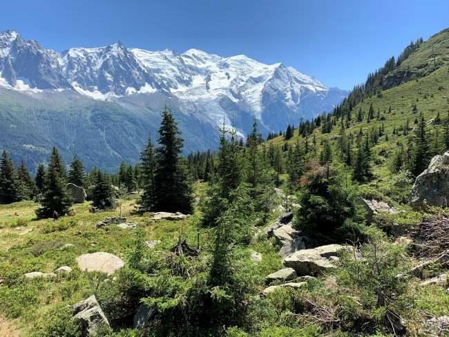 La Charlanon meadow Chamonix